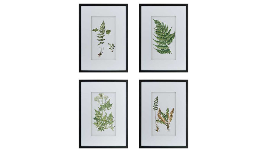 Picture of HZ Fern Black & White Wall Art - Choose 1 of 4 - AV44591